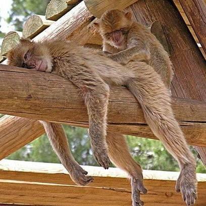 monkeymassage